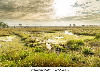 Beautiful scene of empty rice filed, land plot in rural area, rain water swamp after harvesting, cloudy sky and sun in rainy season  Agricultural landscape,  land for sales concept background