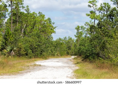 Beautiful scene of a hiking trail in the Florida Everglades