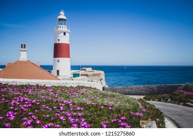 Beautiful scene with lighthouse and flowers on a shore.