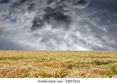 Beautiful Scene Of Storm Clouds Over Wheat Field