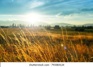 Beautiful scene with waving wild grass on a sunset. Shot with lens flare