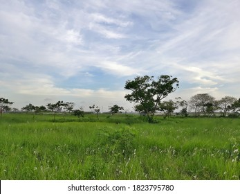 It is a beautiful scenerio of rural area of Bangladesh.  - Shutterstock ID 1823795780