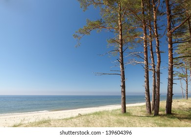 Beautiful scenery of the Baltic sea coast with pine trees in foreground and clear blue sky
