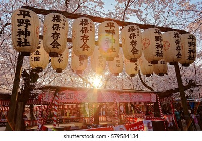 Beautiful scenery of Cherry Blossom Festival ( Sakura Matsuri ) in Hirano Jinjya Temple with traditional Japanese lanterns hanging under Sakura trees & the setting sun in background, in Kyoto, Japan