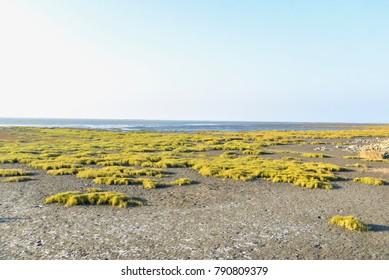 Beautiful Scenery of Coastline in Gaomei Wetlands