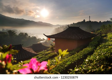 Beautiful scenery during sunrise at Chinese village among Tea Plantation at Ban Rak Thai , Mae Hong Son in Thailand.This is very popular for photographers and tourists.