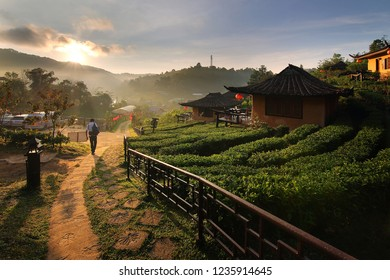 Beautiful scenery during sunrise at Chinese style village among Tea Plantation at Ban Rak Thai , Mae Hong Son in Thailand.This is a very popular for photographers and tourists.