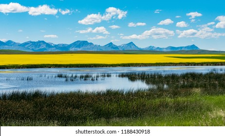 Beautiful scenery of farmland in the foothills of Alberta Canada, with mountains, Canola fields, and prairie wetlands.