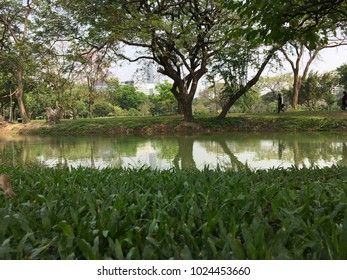 Beautiful scenery from green trees and small canal in Lumphini Park Bangkok, Thailand.