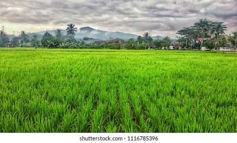 beautiful scenery in the hometown with hills and rice fields stretching wide.