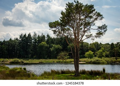 Beautiful scenery with a lake and trees