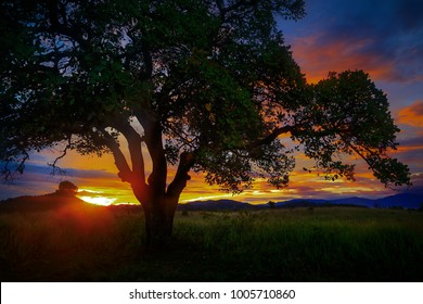 a beautiful scenery of meadow during sunrise time at west sumatera indonesia