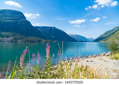 beautiful scenery of a norwegian fjord with some blooming fireweed in the foreground