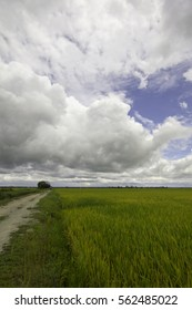 Beautiful scenery in the paddy fields when the sky is cloudy.