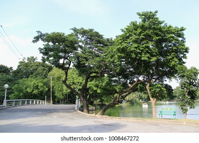 Beautiful Scenery of Park in the heart of Bangkok, Thailand
