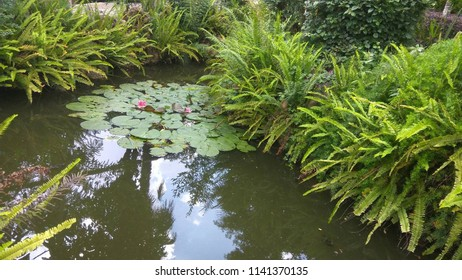 Beautiful scenery of a pond has been developed for some grassroots trees and lotus feet.