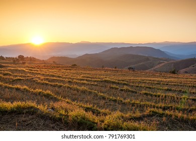 Beautiful scenery Rice field after harvesting in northern Thailand with layers of mountains and the sun is the background.