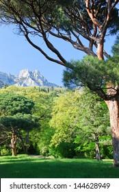 Beautiful scenery, southern coast of Crimea, Alupka, Ukraine/Beautiful Crimea landscape