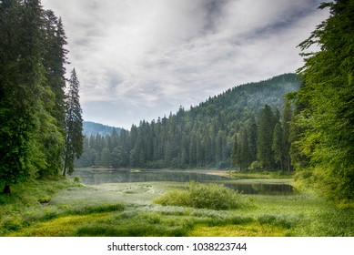 Beautiful scenery of Synevyr lake. Carpathian mountans, Ukraine
