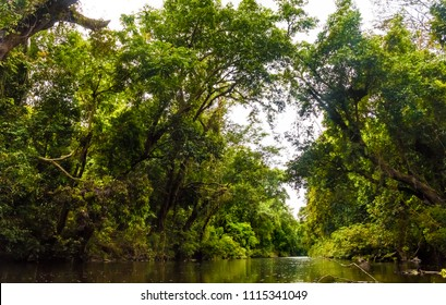 A beautiful scenery of Tahan River surrounded by Taman Negara's old rainforest and riverbanks with with huge, leaning Neram trees (Dipterocarpus oblong ifolius), forming an archway over the water.
