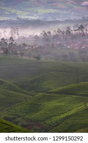 Beautiful scenery of tea plantaions in the foggy morning, West Java, Indonesia
