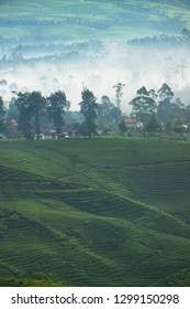Beautiful scenery of tea plantaions in the misty morning, West Java, Indonesia