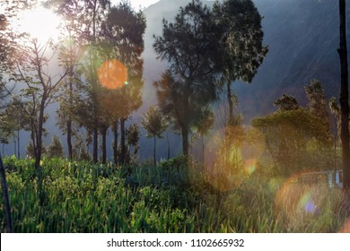 A beautiful scenery of tree at morning with sunflare