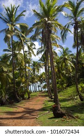 """A beautiful scenery of a tropical paradise island in the Atlantic Ocean (French Guiana). Salvation islands accomodated the notorious penal colony of France. Henri """"Papillon"""" Charriere was held there."""