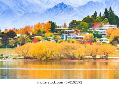 A beautiful scenery of wanaka tree, New Zealand in cloudy in autumn