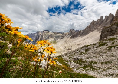 Beautiful scenery with wild yellow flowers and rocky peaks in the Dolomite Mountains, Italy, in summer