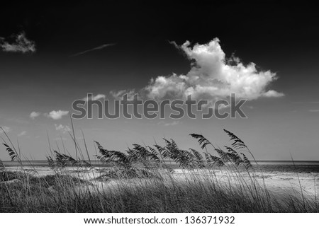 Beautiful scenic beach dunes with Sea Oats (Uniola Paniculata) in Black and White