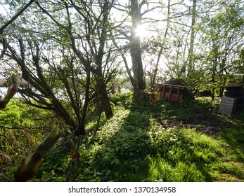 beautiful scenic garden in the Netherlands