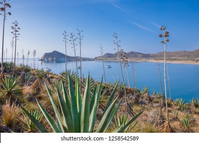 beautiful scenic of Genoveses bay and beach, from mountain with agave plants and desert vegetation, in Gata Cape Natural Park, in Almeria (Nijar, Andalusia, Spain, Europe)