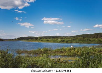 Beautiful scenic landscape of blue river water, clear blue sky with white fluffy clouds, many green plants and calm white stork resting outside on sunny summer day. Horizontal color photography.
