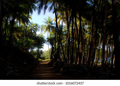 A beautiful scenic pathway through an amazing tropical forest in a paradise island in the Atlantic Ocean (French Guiana). Salvation islands accomodated the notorious penal colony of France.
