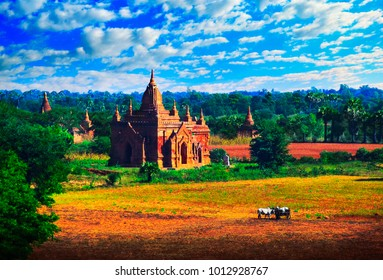 Beautiful scenic view of ancient Buddhist Temple at the background of fields, foliage, cloudy blue sky, and two feeding white bulls cart in the foreground, Bagan, Myanmar (Burma), South East Asia