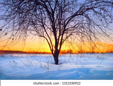 Beautiful scenic view - evening winter landscape with shadow figure of naked tree (weeping willow) against the background of colorful sunset sky over field covered with snow in Moscow region, Russia