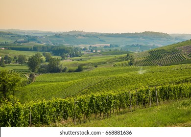 Beautiful scenic vineyard with sunset sky in the region of the wine