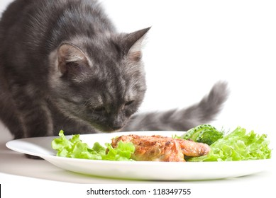 Beautiful Scottish young cat eating chicken wings
