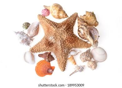 beautiful sea cockleshells and starfish