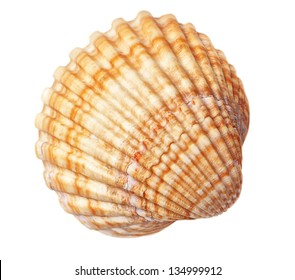 Beautiful sea conch texture. On a white background.