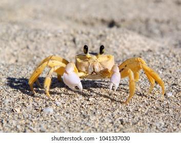Beautiful sea crab on the sand take a close-up photo