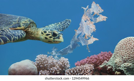 Beautiful sea hawksbill turtle swiming above colorful tropical coral reef  polluted with plastic bag - environmental protection concept