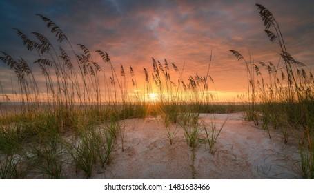 Beautiful sea oats on a Florida beach dune at sunrise