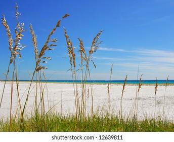 Beautiful sea oats on pretty beach with ocean in distance