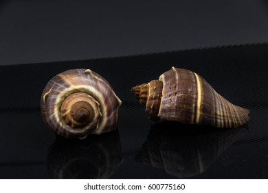 Beautiful sea shell on a black background