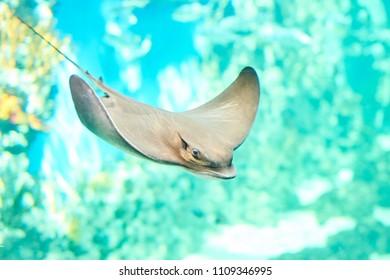 Beautiful Sea World. Sea fish at depth.