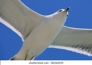 Beautiful seagull flies over the sea surface