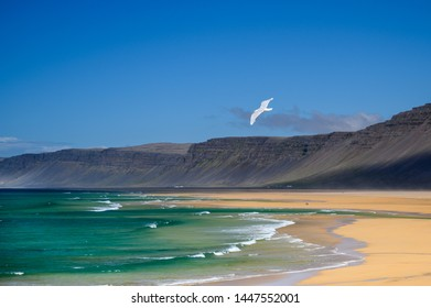 Beautiful seagull flying over turquoise sea with waves with western fjords on the background