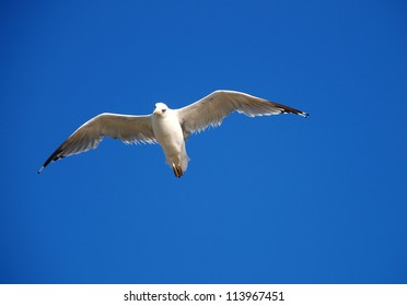 Beautiful seagull on a background blue sky
